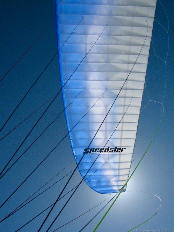 Speedster Wing Logo