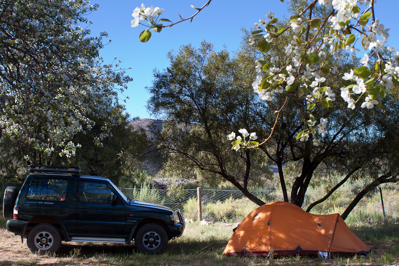 Camping under the pear trees - Evie the Pajero and MSR Fury