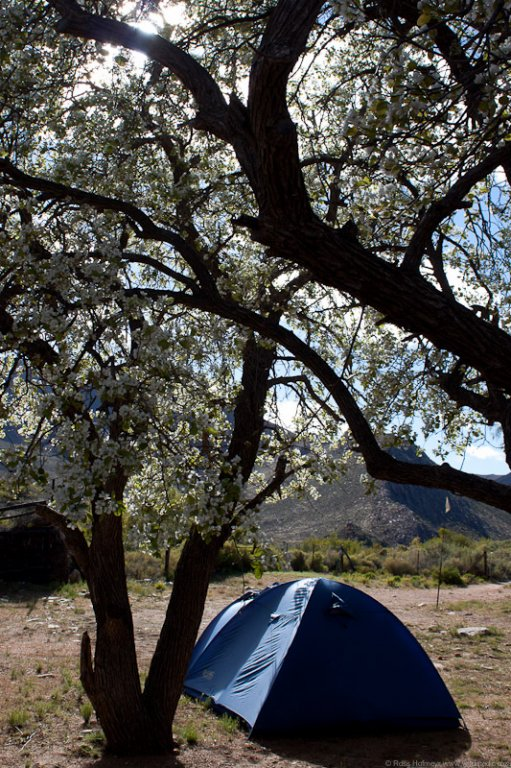 Camping under the pear trees at the Witteberg Khaya