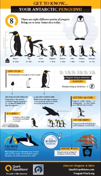 Penguin_infograpic